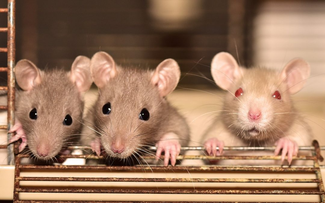 Important questions to ask a pest control company