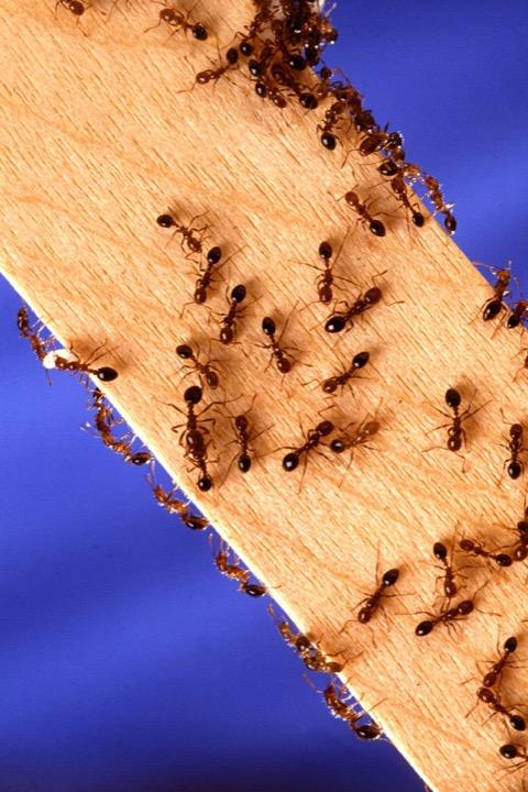 pest control worcester