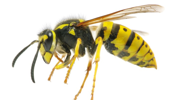 worcester wasp nest removal