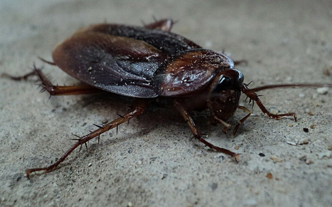 How To Control Cockroaches
